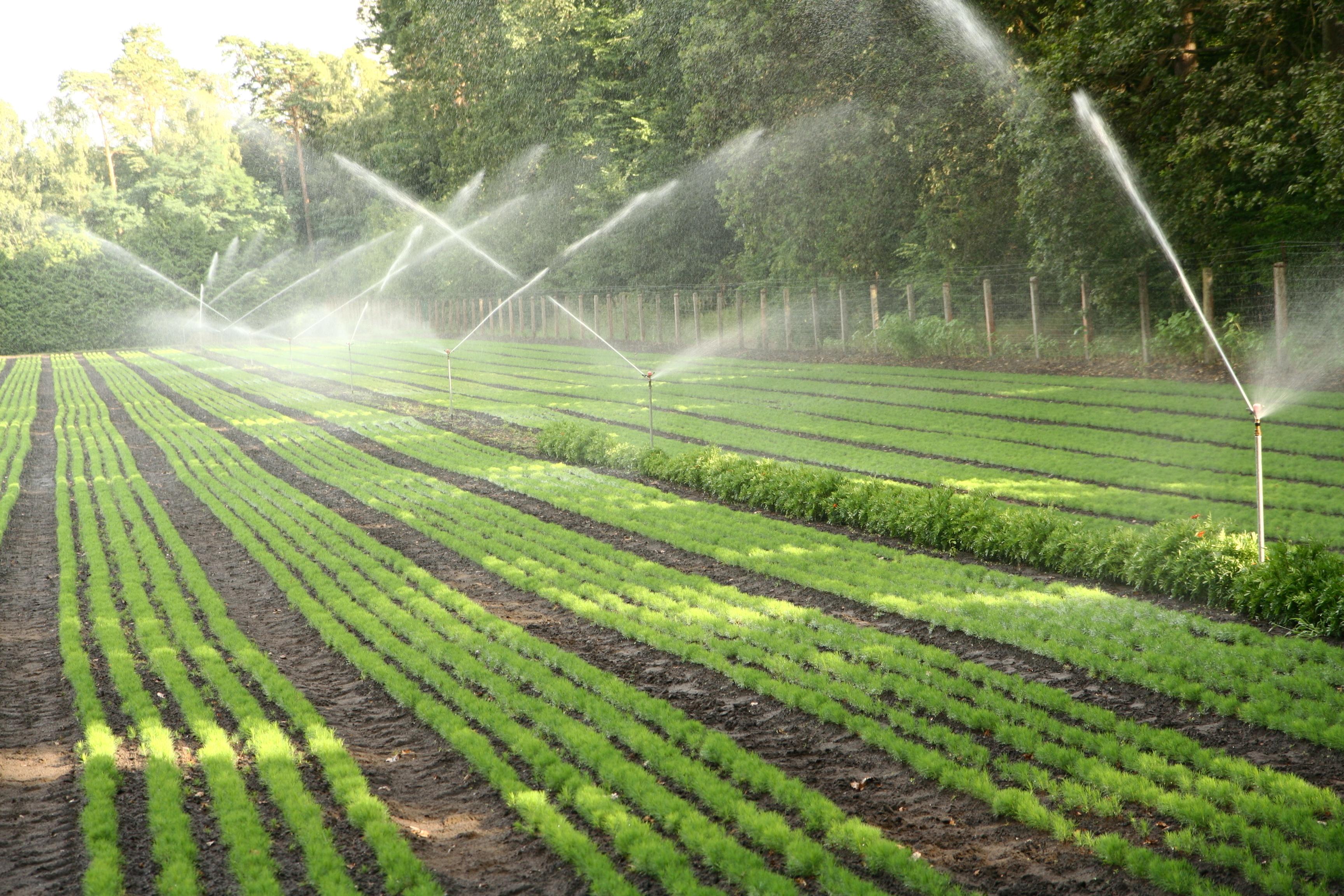 Sprinkler irrigation images galleries - Riego por aspersion ...